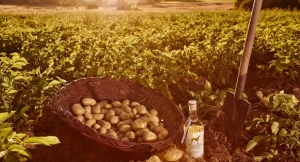 Kartoffeln als Basis für den Windspiel Gin