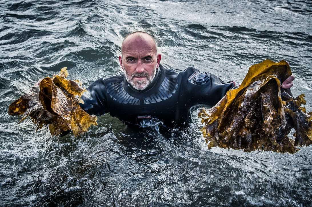 Taucher der Algen für die Isle of Harris Gin Herstellung erntet